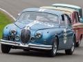 Bedrängter Jaguar