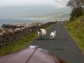 Riley RMA auf der Isle of Mull