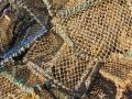 Hummerreusen in Tobermory